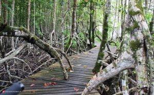 جنگل های مانگرو تایلند