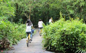 دوچرخه سواری در بانکوک تایلند